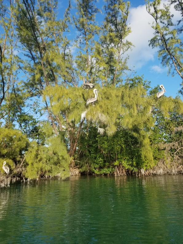 4a pelicans islamorada